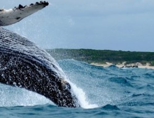 Celebrating the Whales in Port Elizabeth